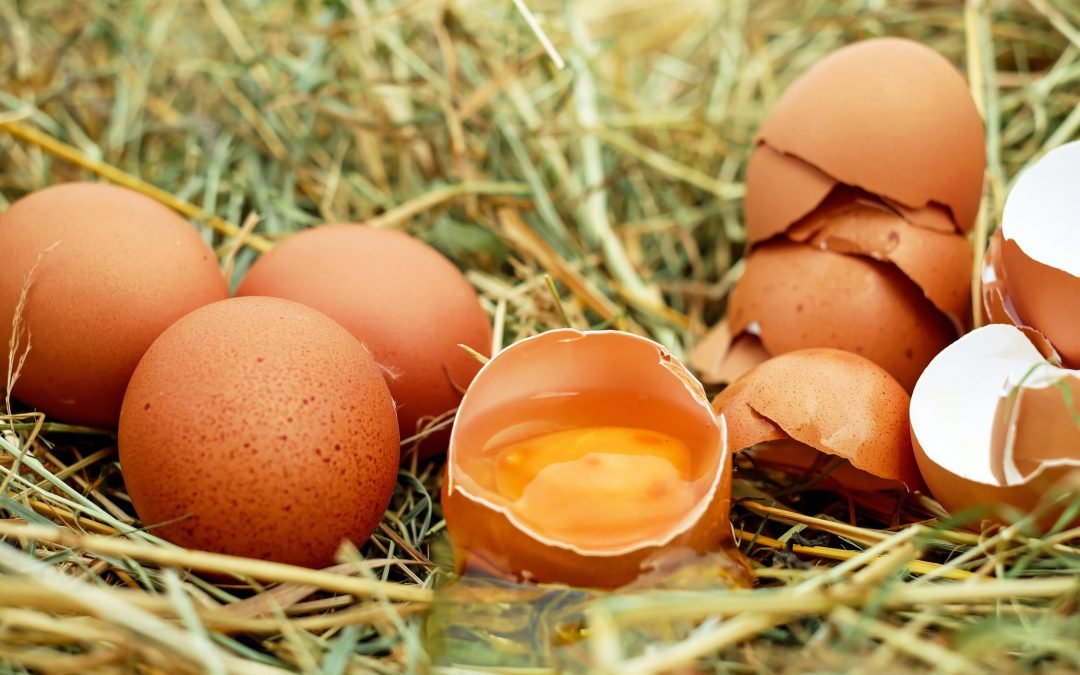 The Hatch Act has nothing to do with broken eggs